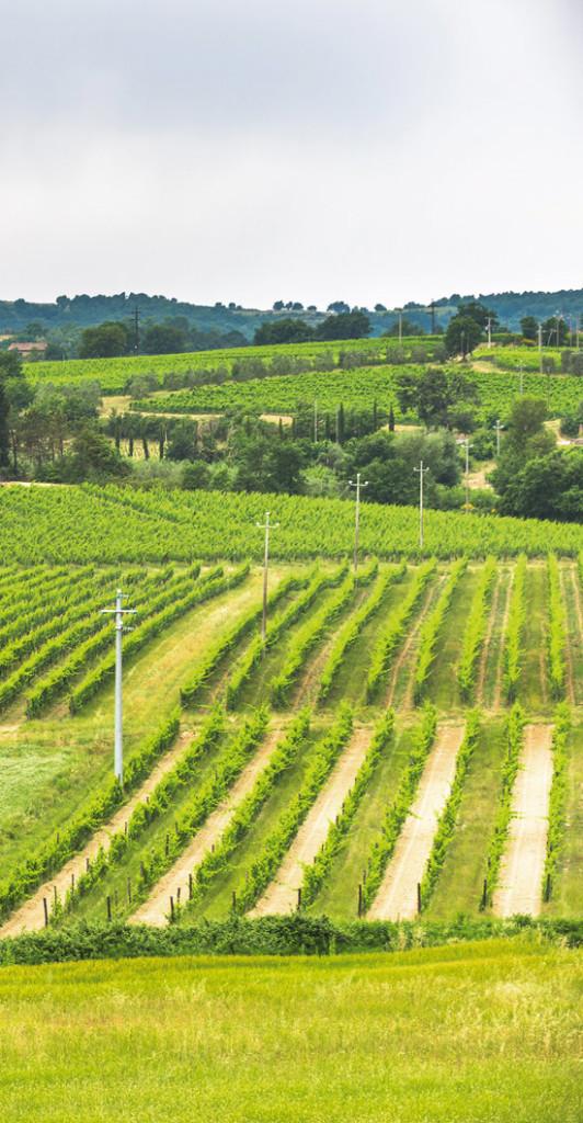 vigne-vigne